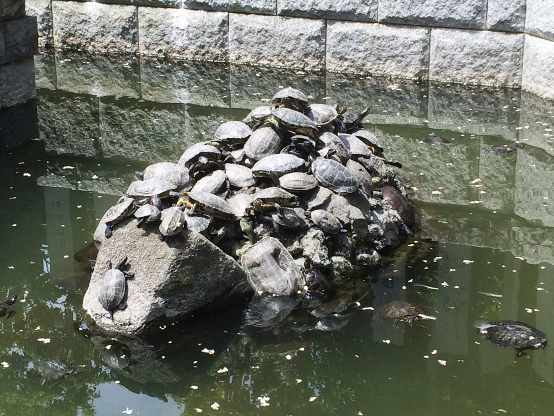 亀_新勝寺