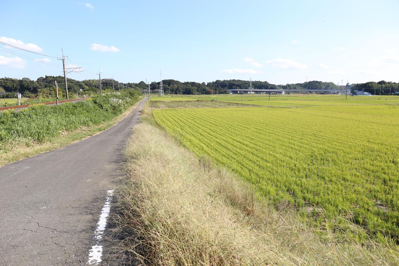田んぼ_成田