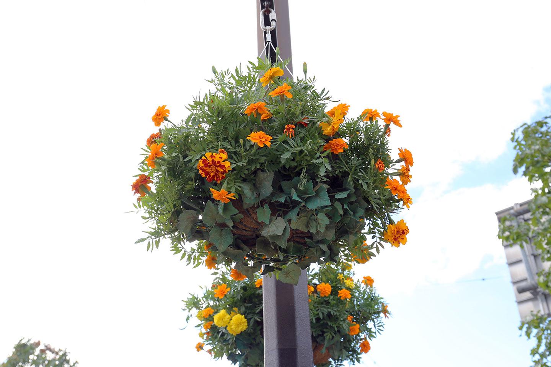 空中の鉢植え