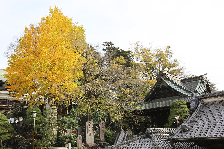 成田山公園紅葉状況