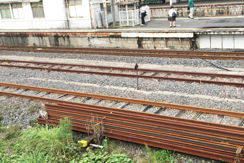 JR成田駅の猫