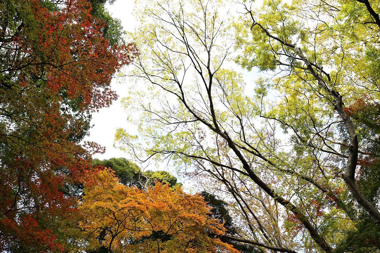 成田山紅葉_2016