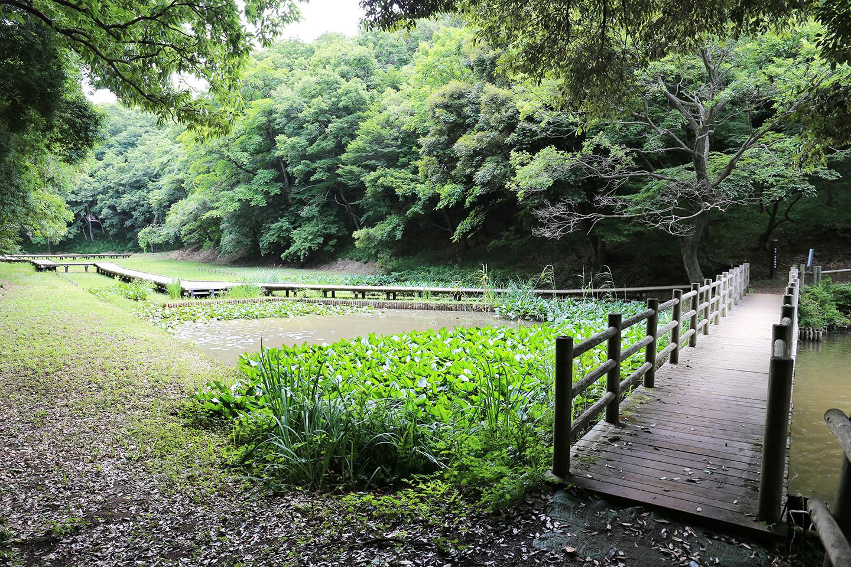 水生湿生植物園