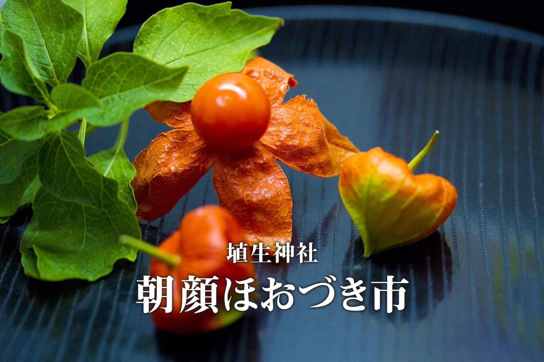 埴生神社 朝顔ほおづき市