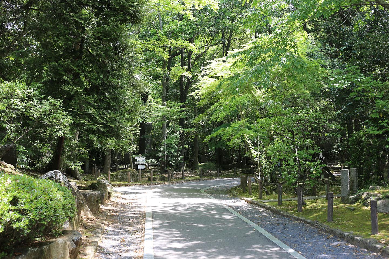新緑 成田