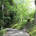 新緑 歩道