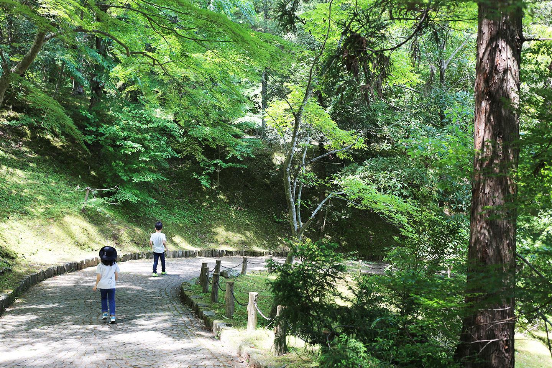 新緑 歩道 成田