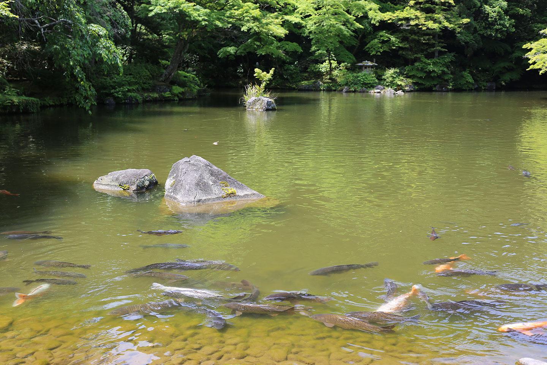 新勝寺 池 成田山